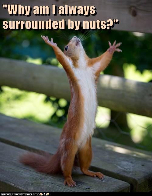 puns,squirrels,nuts