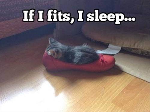 shoes kitten cute fits sleep Cats - 8010754304