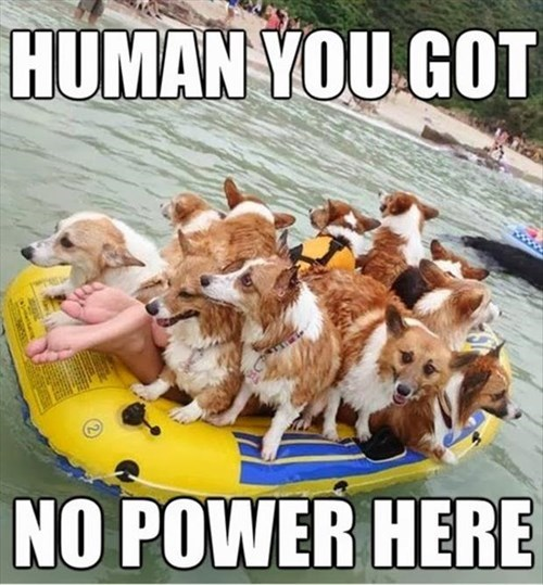 dogs cute swimming funny boats - 8010757120