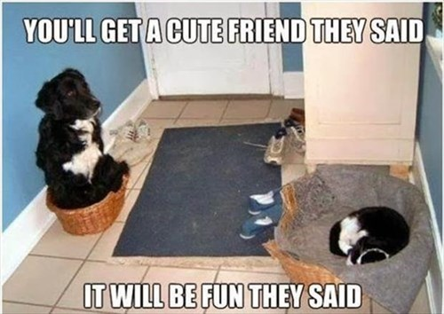 dogs sleep beds Cats funny They Said - 8010760704