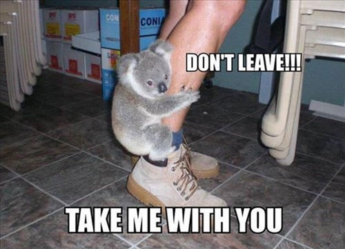 dont-leave,walkabout,koalas,cute