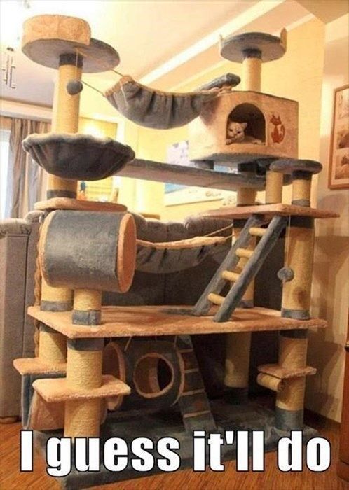 cat tree scratching post Cats funny - 8010774272
