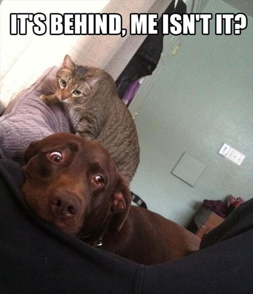 dogs scared Cats funny creep - 8010775296