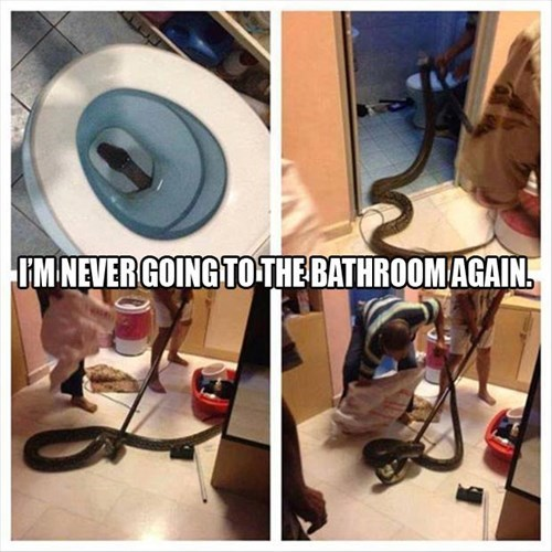 scary bathroom toilet snakes - 8010784000