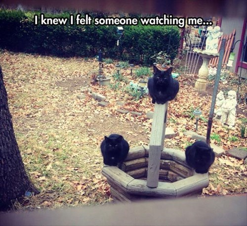 well creepy watching me Cats funny - 8010787584