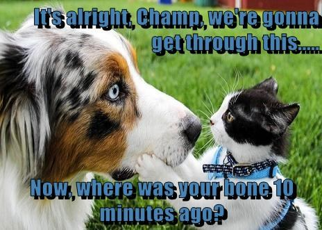 It's alright, Champ, we're gonna get through this..... Now, where was your bone 10 minutes ago?