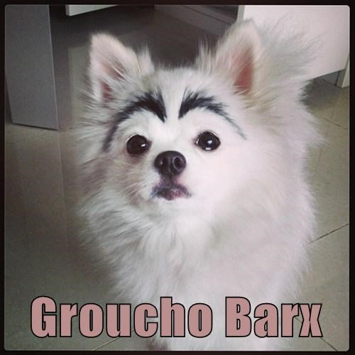dogs cute eye brows funny - 8011290112