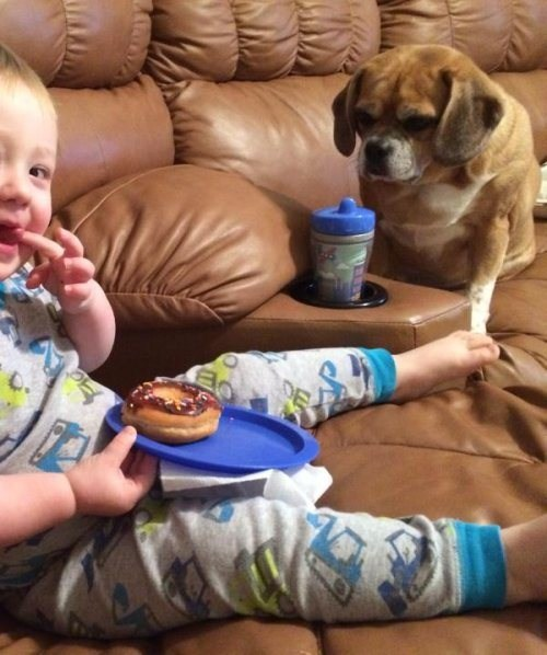 Babies,dogs,donuts,cute,noms