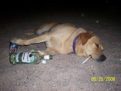 beer dogs coors Rum night funny