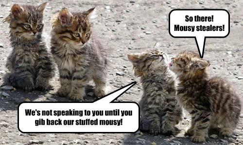 kitten sharing cute - 8012398080