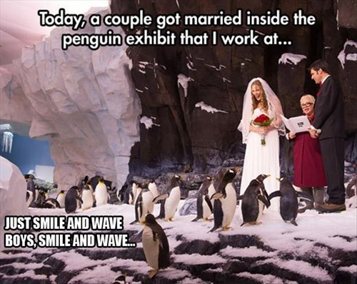 penguins,zoo,wedding,funny