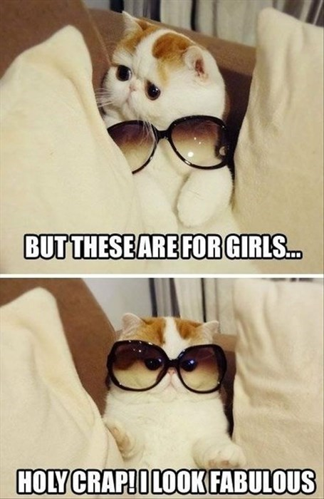 fashion sun glasses style Cats funny - 8012540672