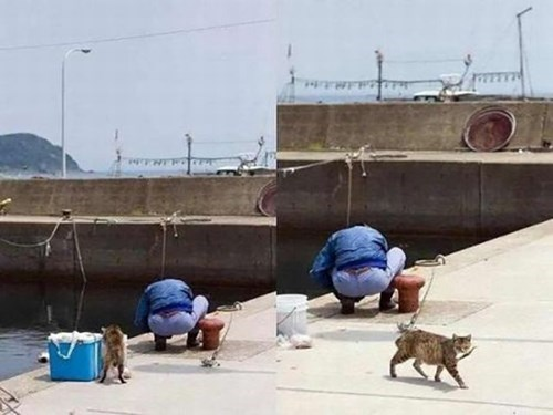 steal,dock,fisherman,fish,Cats