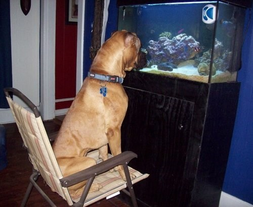 dogs,fish tank,cute,watch,fish