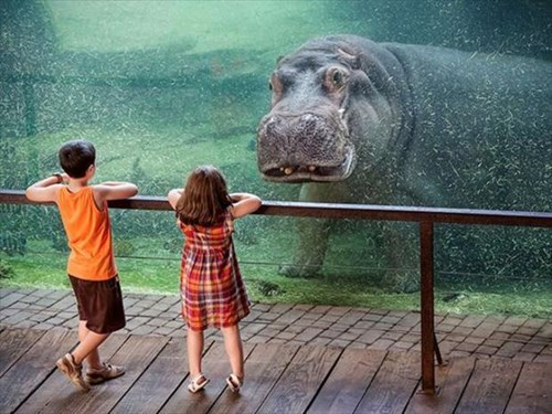 hello hippos kids puns cute - 8012583424