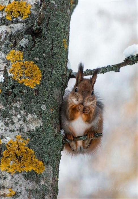 snow,cold,squirrel,cute,winter
