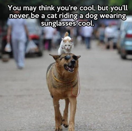 cool dogs sunglasses friends Cats