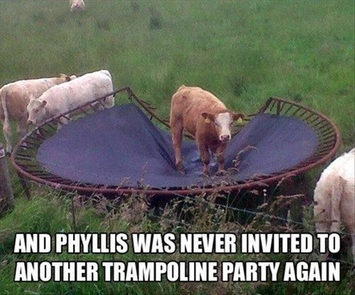trampoline Party funny cows