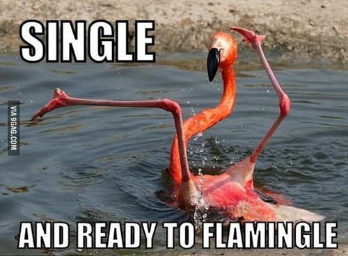 rhyme,flamingos,funny,dating