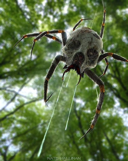 Who Wants a Pet Skulltula?