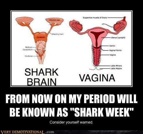 brain funny lady bits period shark week - 8015416576