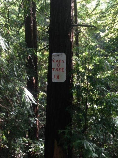 tree,sign,warning