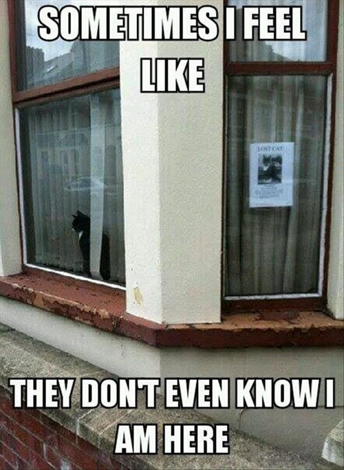 Cats,lost,funny,Sad,signs,stealth