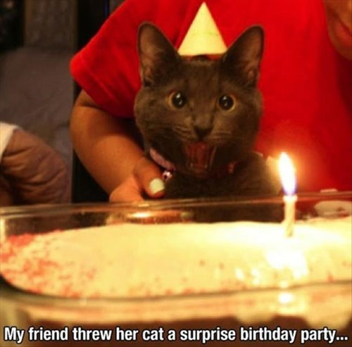 Cats birthday cake surprise