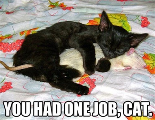 Cats forbidden love funny rats you had one job - 8015810560