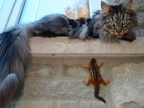 Cats chipmunks cute funny squirrels - 8015844864