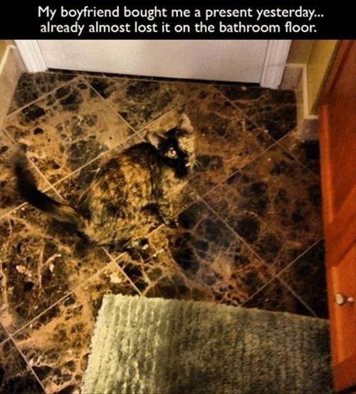 Cats camo lost funny hide - 8015878144