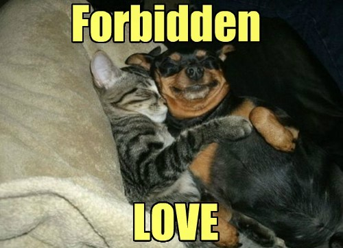 Cats cute dogs forbidden love funny - 8016255488
