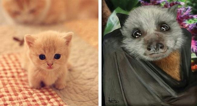 tiny kitten and a cute bat