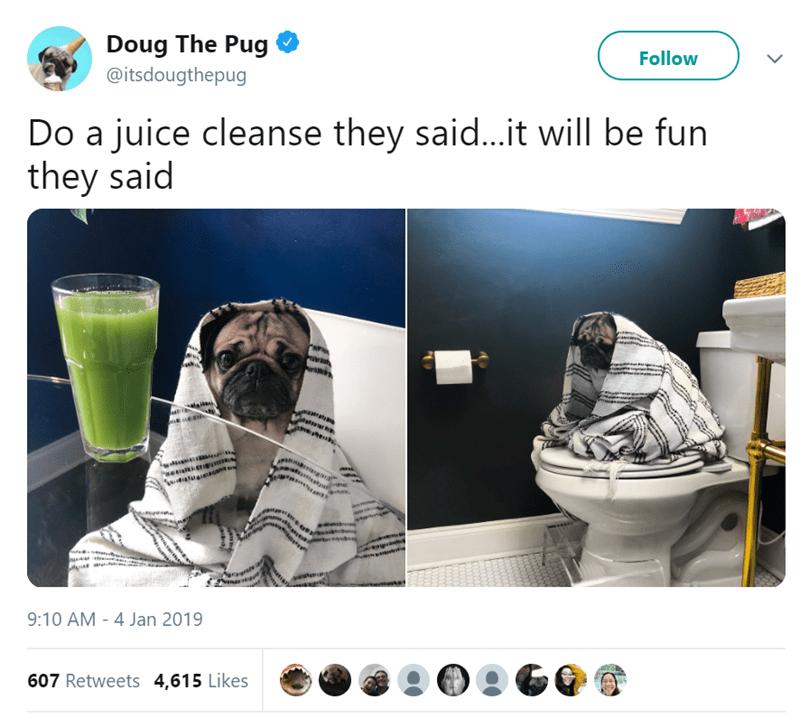 pug funny tweets animal tweets - 8016645