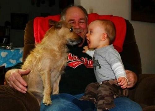 Babies dogs parenting grandparents - 8016906752