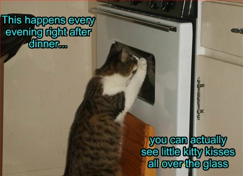 Cats,cute,delicious,hungry,meat,oven