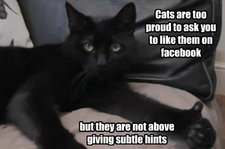 Cats,facebook,funny,thumbs up,proud