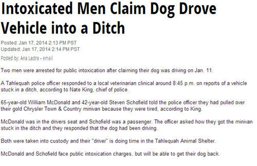 dogs drunk driving Probably bad News news