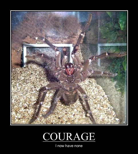 spiders,courage
