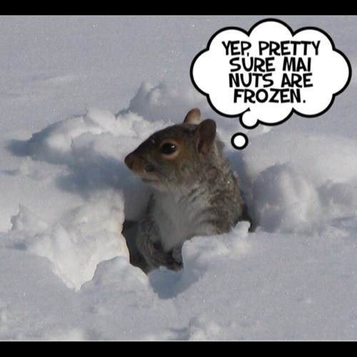 frozen funny nuts puns - 8017386496