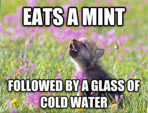 Memes baby insanity wolf - 8017390848