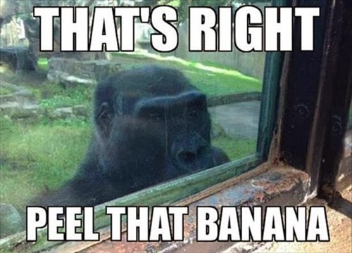 bananas peaking gorillas funny