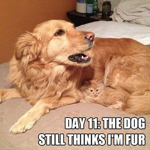 Cats dogs disguise kitten still thinks - 8017534720