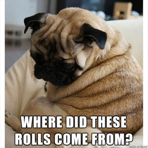 chubby dogs exercise rolls puns - 8017540864