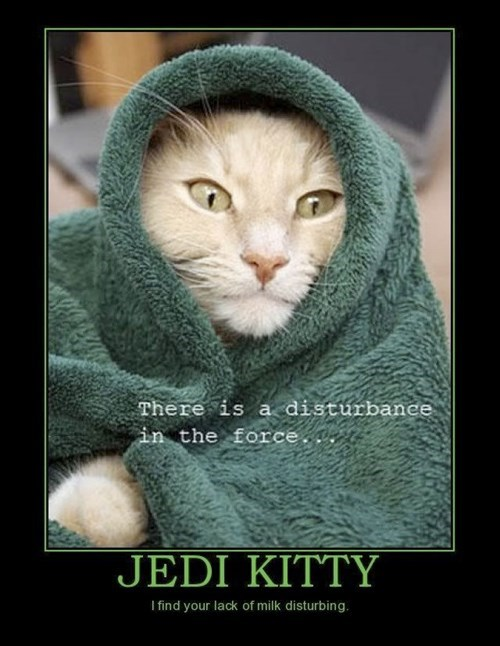 cat star wars milk funny Jedi - 8018743296