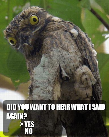 IRL,owls,zelda,Kaepora Gaebora