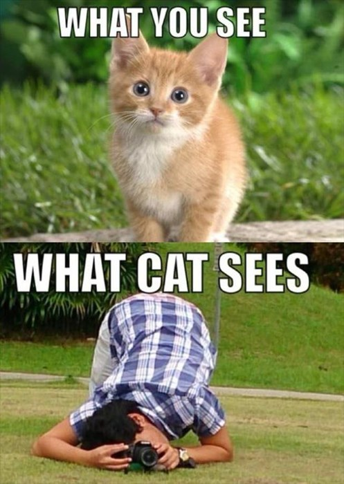 kitten photos what cat sees Cats funny - 8018830336