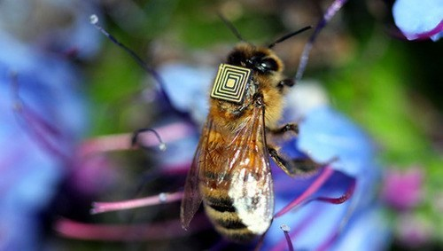 sensors awesome bees science biology - 8018831360