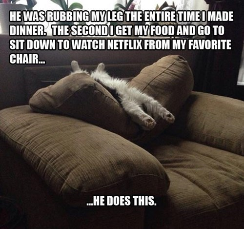 kitten annoying netflix relax Cats funny