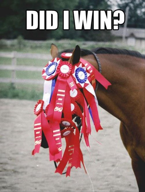 FAIL race trophy winner horses blinders funny